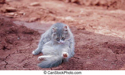 Funny cat licking itself on ground