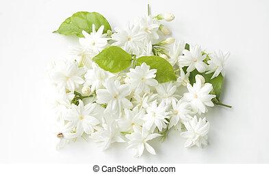 Jasmine flower on a white background. - Natural jasmine...