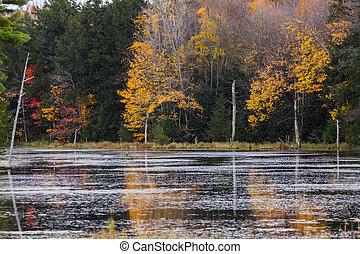 fall foliage reflections