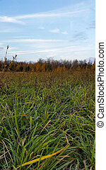 grassy field in autumn