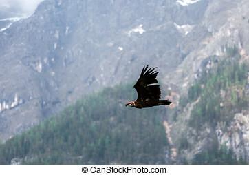 The eagle soars