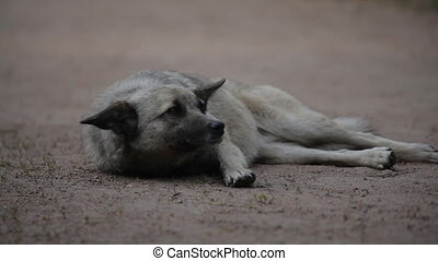 Portrait of a watchful dog lying on the ground and wags its tail