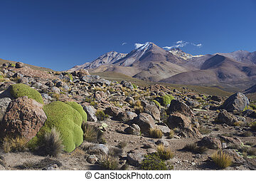 Landscape of the altiplano in northern Chile