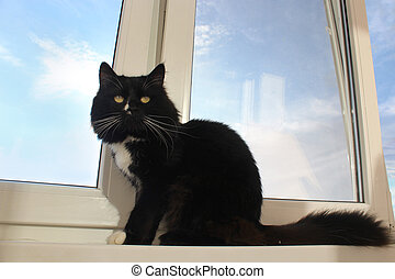 black cat sits on the window-sill