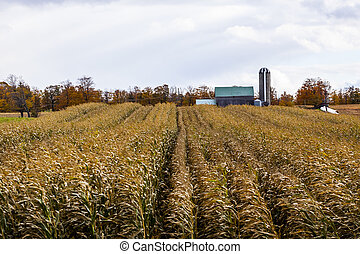 a farmers crop field