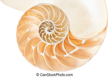 Nautilus shell section on white - Nautilus shell section,...