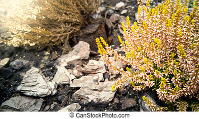 Toned photo of small pink and yellow flowers growing on...
