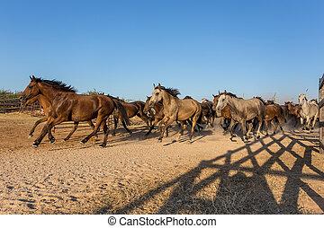 Herd of horses runs in the corral. Spain El Rocio.