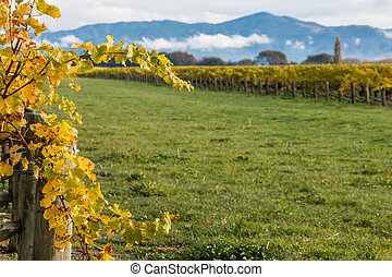 withered grapevine leaves with vineyard in background