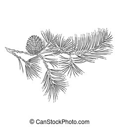 Branch Pine with pine cone as vintage engraving vectoreps -...