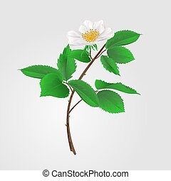 Wild rose vectoreps - Wild rose twig with leaves and flowers...