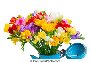 Fresh freesia flowers posy in pot close up isolated on white...