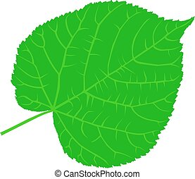 linden, lime, teil, lime-leaf, vector, isolated linden leaf,
