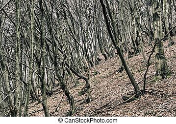 árboles, en, otoño, bosque,