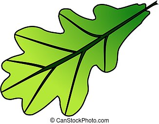 oak,Quercus robur, vector, isolated oak leaf,