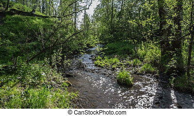 Creek in the woods - creek flows among spring forest