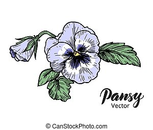 Hand drawn pansy flowers. Vintage style vector illustration.