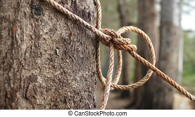 Tightened Rope Around Tree Trunk - Tightened rope around...