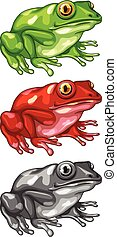 Frog in three different colors illustration
