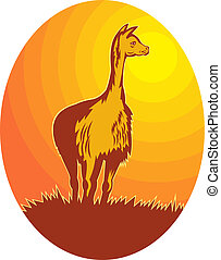 Vicuna standing with sun in background - illustration of a...