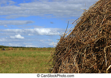 Yellow stack of straw - Close view of a stack of dry straw...