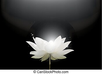 Magic White Lotus flower - Vector illustration of Magic...