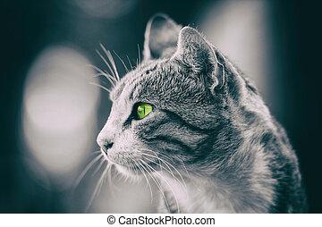 Domestic Cat Profile Portrait