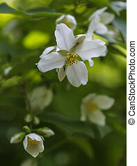 blooming flowers - spring branch with blooming flowers of...