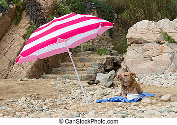 Dog at the beach - Dog resting on a bath towel at the beach
