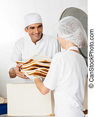 Baker Receiving Bread Waste From Coworker - Smiling male...