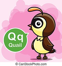 Q Quail color cartoon and alphabet for children to learning vector illustration eps10