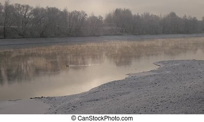 The lonely duck swimming in a steamy river in a winter day. Snowy banks and frozen white trees in the background