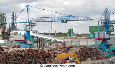 Lumber industry Conveyors of logs sorting machine - Lumber...