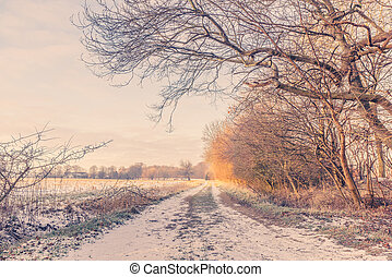 Nature path at wintertime in the sunrise - Nature path at...