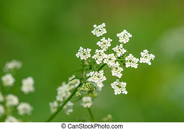 White wildflowers on green background
