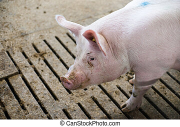 Pink pig in a dirty stable
