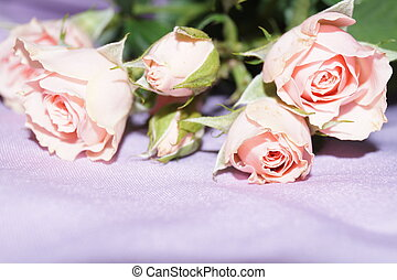 Bouquet of pink roses on a mauve background