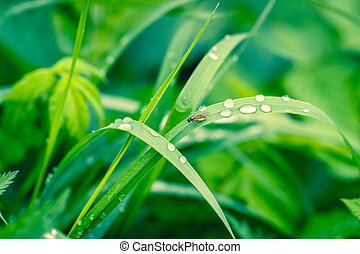 Grass with raindrops in a garden