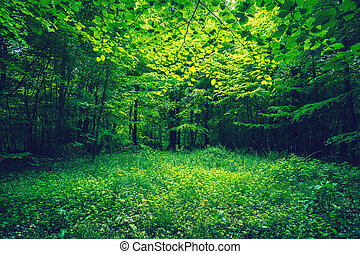 Green leaves in a forest clearing in the spring