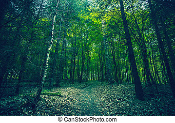 Dark forest with green trees