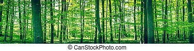 Panorama landscape of a beech forest