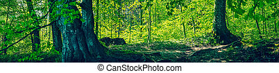 Fairytale forest with green trees