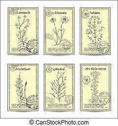 Medicinal herbs set.