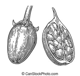 Baobab fruit and seeds Vector vintage engraved illustration...