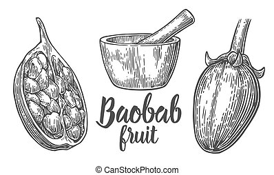 Baobab fruit and seeds. Mortar and pestle. Vector vintage...