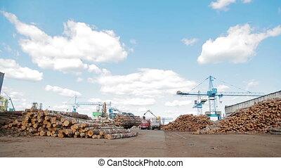 Modern lumber factory - Lumber industry Conveyors of logs in...