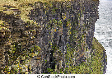 Cliffs of Moher - Detail photo of Cliffs of Moher in Ireland