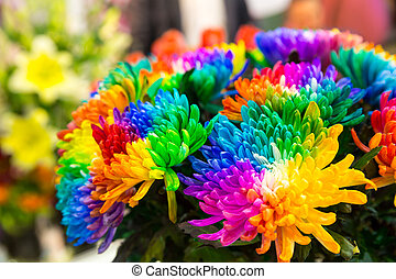 Multicolored marguerites - Bright multicolored marguerites...