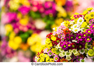 Colorful flowers - Many little colorful marguerite in...