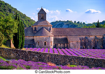 Lavender fields at Senanque monastery, Provence, France -...